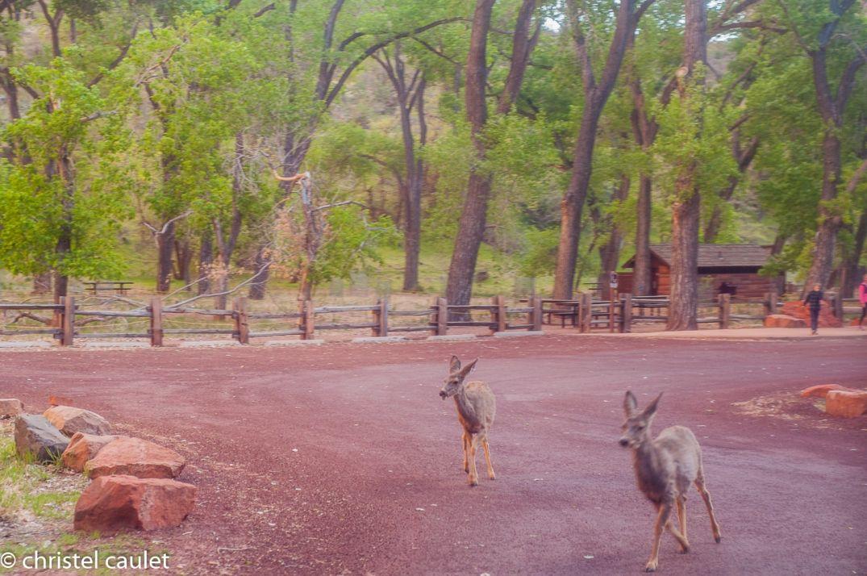 Découvrir le Zion Canyon - road-trip USA