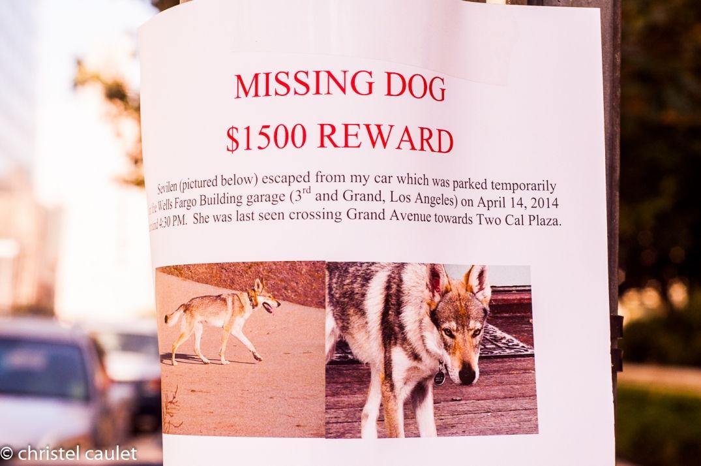 récompense de 1500$ pour un chien