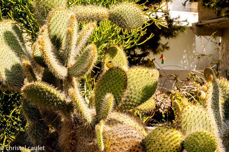 Végétation exotique à Los Angeles