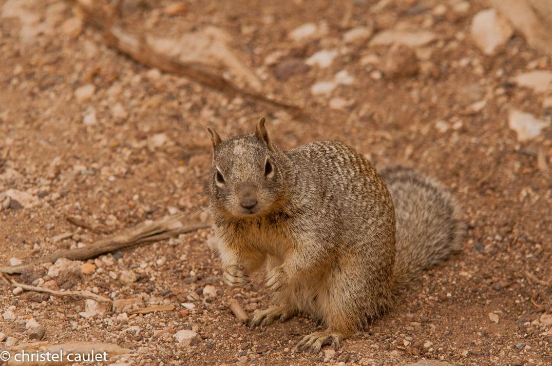 Un écureuil dans un parc aux États-Unis
