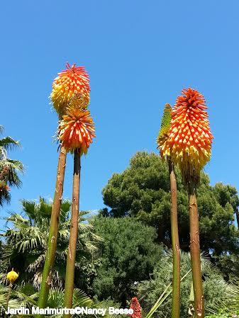 Voyage : Le jardin botanique Marimurtra à Blanes 03