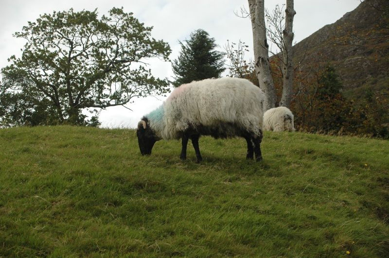 Pâturage des sols par les moutons