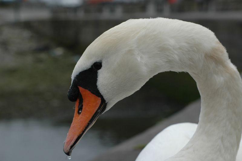 Voyage : Quoi voir à Galway ? 03