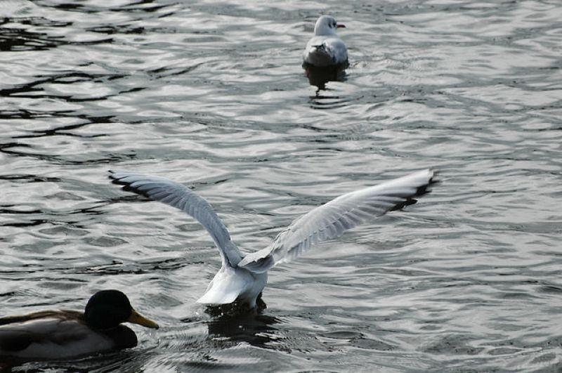 Voyage : Quoi voir à Galway ? 18