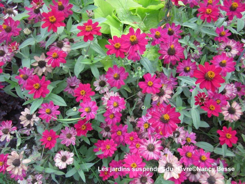 Voyagez stylées : Les jardins suspendus du Havre 7