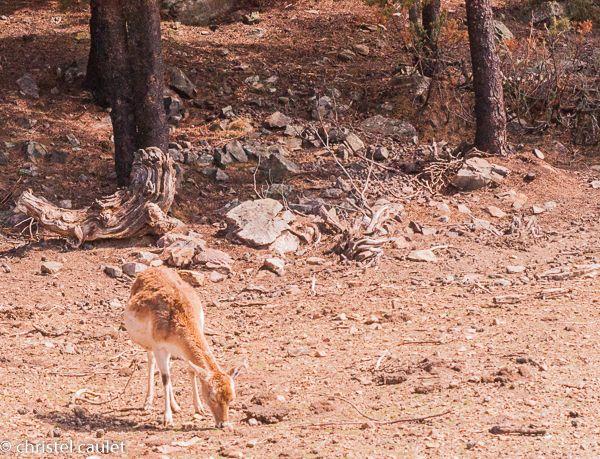 Voyagez stylées : Naturlandia en Andorre 06