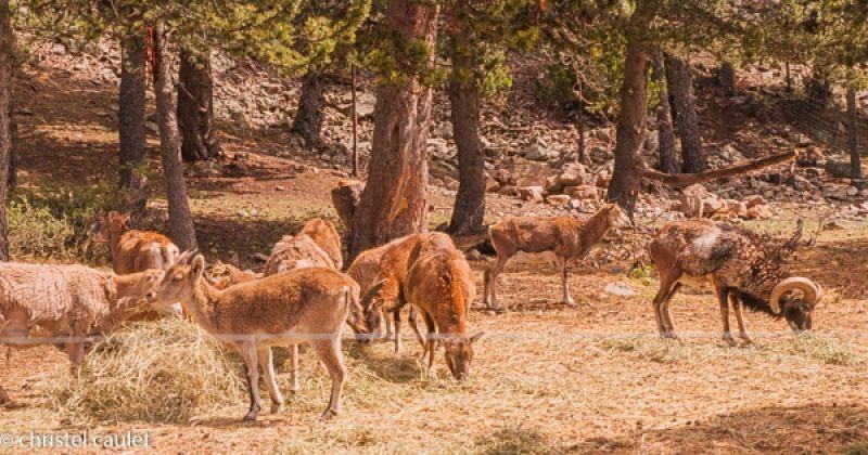 Voyagez stylées : Naturlandia en Andorre 10