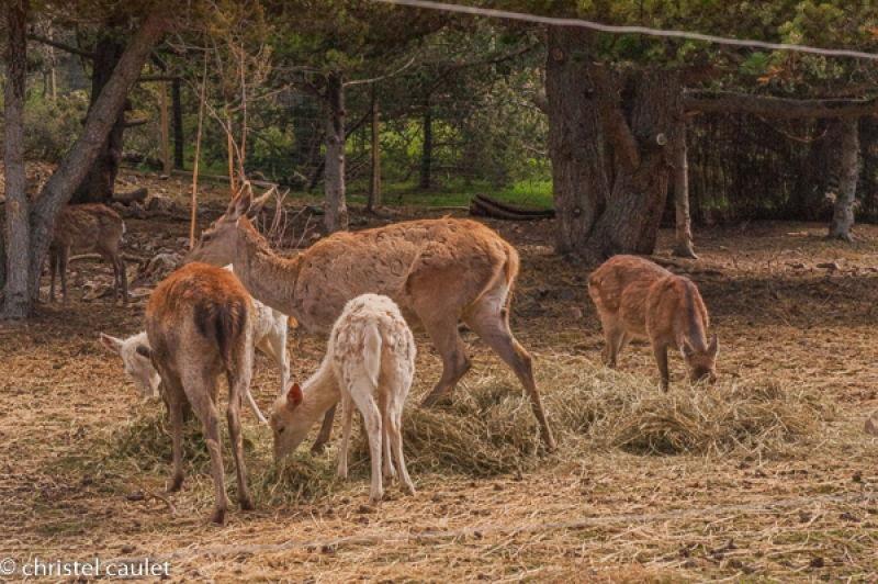 Voyagez stylées : Naturlandia en Andorre 11