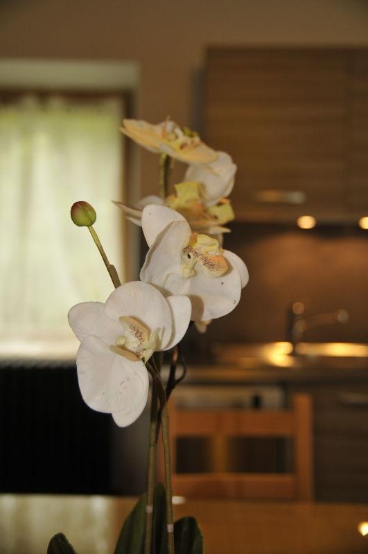 Décoration florale à la Tissanderie à Lassouts