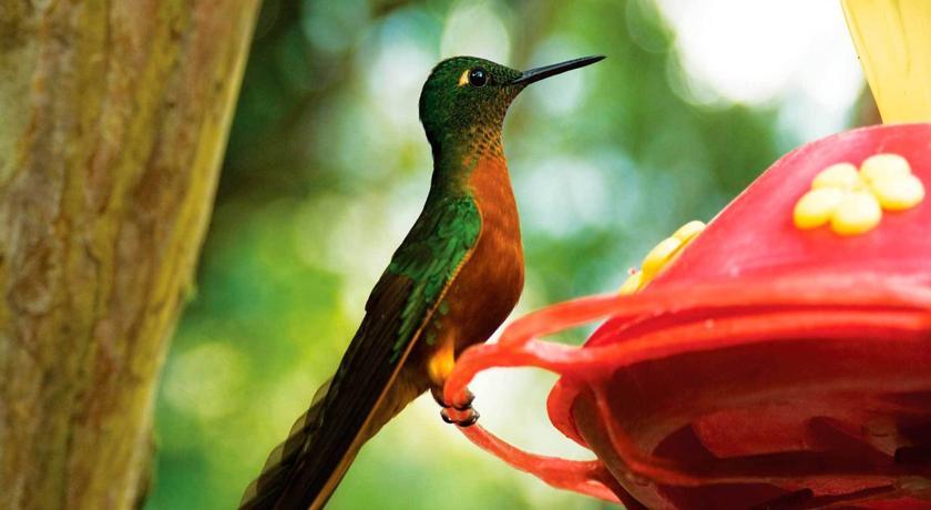 Un oiseau dans le jardin botanique d'Inkaterra au Machu Picchu