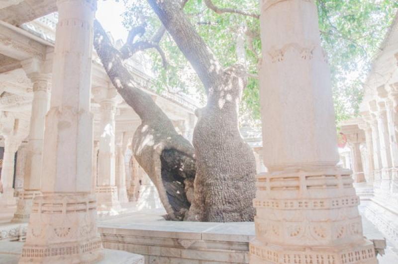 La végétation fait corps avec le temple de Ranakpur en Inde