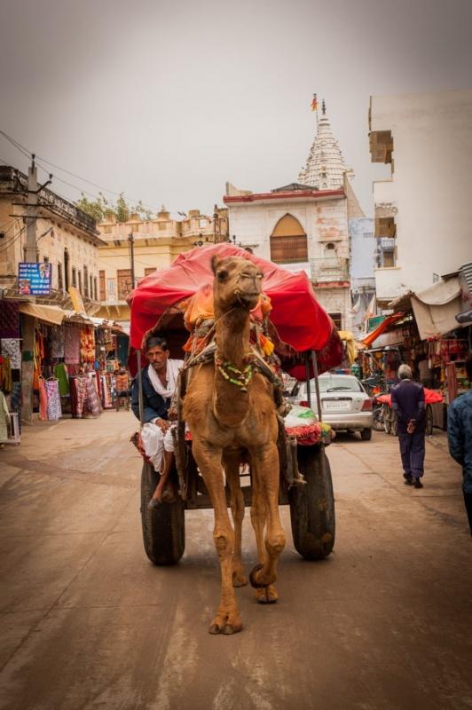 Le désert n'est pas loin, ici, on se balade en chameau