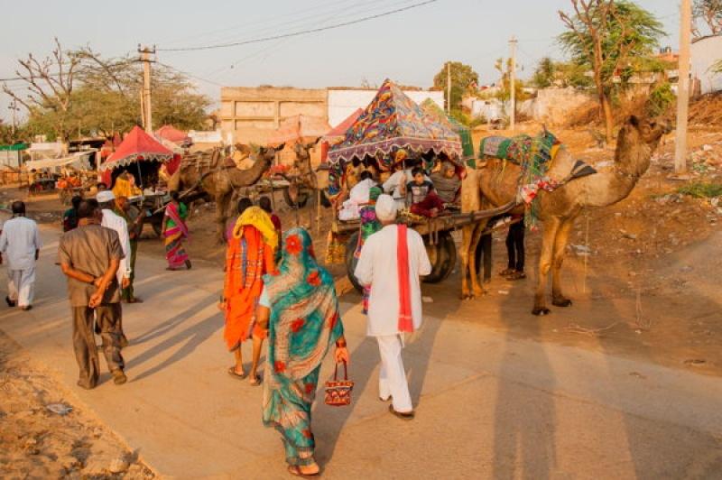 En chameau à Pushkar en Inde
