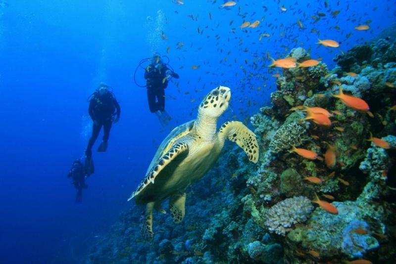 Dans les eaux turquoises à Cozumel aux Caraïbes