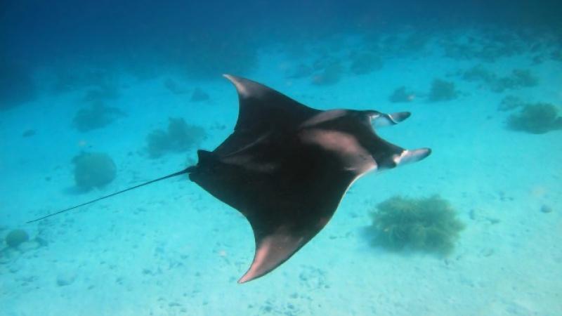 Sur les îles Cayman aux Caraïbes