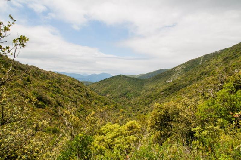 Les monts verdoyants des Gorges de Galamus