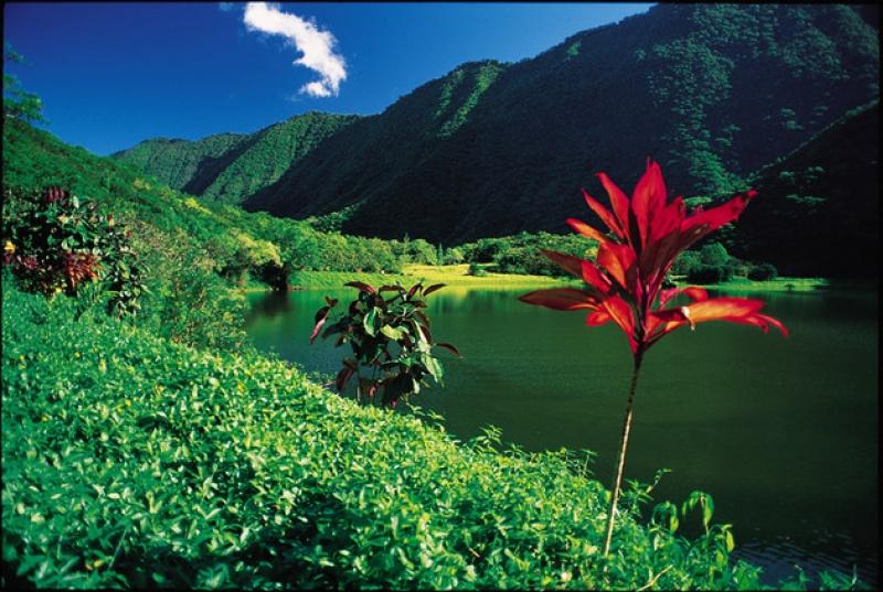 La fleur de tiaré, emblème national