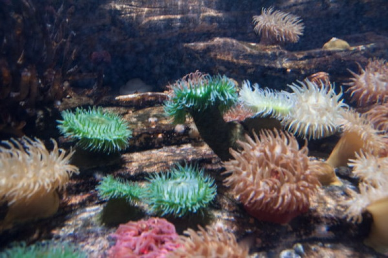 Dans d'immenses aquariums à Océaonopolis