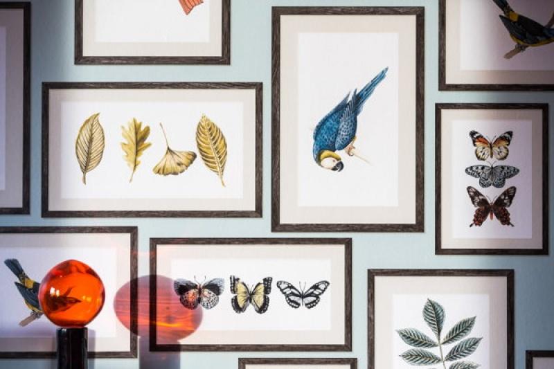 Tableau animaux - Villa Bougainvilles à Nice